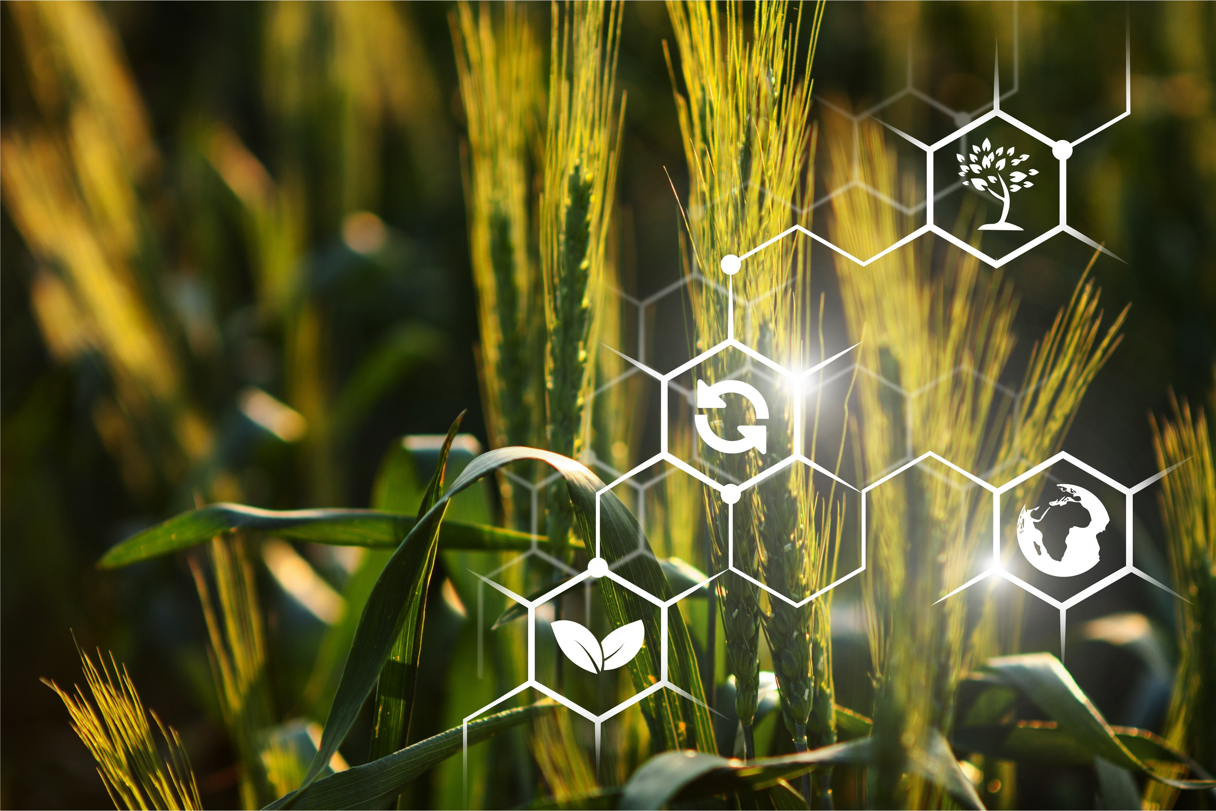 AgroTech 2.0: интеллектуальные технологии в сельском хозяйстве