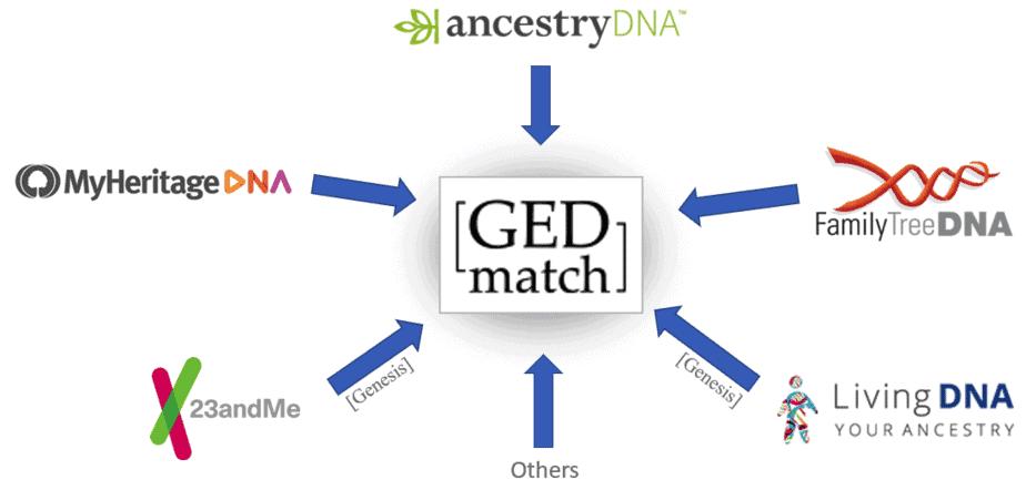 ДНК пользователей генеалогического сайта Gedmatch стали доступны для полиции