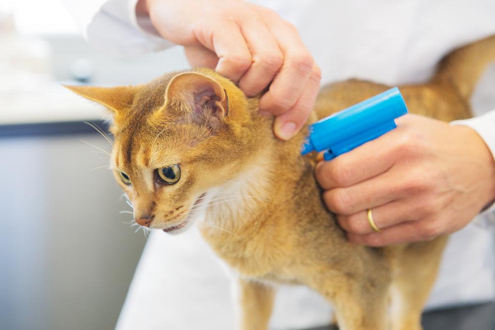 В России начнут вживлять чипы домашним животным
